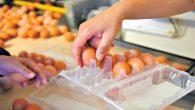 Nota:Diario Popular 22/5/20 Consumidores Libresy laCámara de Productores Avícolasdicen que aumentó la demanda, los costos son más caros y hay conductas especulativas.El precio de los huevos aumentó casi el 50% […]